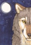 Wolf's moon ACEO by CunningFox