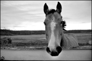 Horse Perspective by MauserGirl