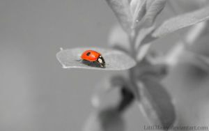 Little Red by Samantha-meglioli