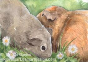 'Pigs and Daisies ACEO by Pannya