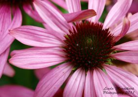 flower by LirianaPhotography