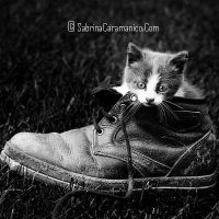 . cat . by sabbbriCA