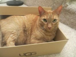Oliver took over the box XP by VioletStar0131