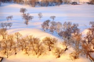 Bashang, Inner Mongolia, China by laogephoto