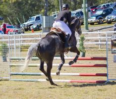 STOCK Canungra Show 2013-93 by fillyrox