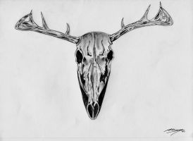 The stag's skull by MarianeRT