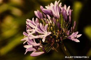 Flowers in a Different Light #2 by ecr8on