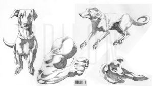 Rough#Dogs#Arm by odilon2012