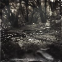 Roots by fabriziotedde