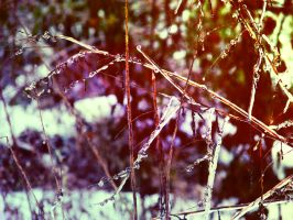 Remnants by Morna