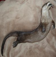 Otter Mount for sale by Phoenix-Cry