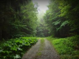 Misty Forest II by Weissglut