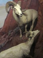 Taxidermy 3 by chamberstock