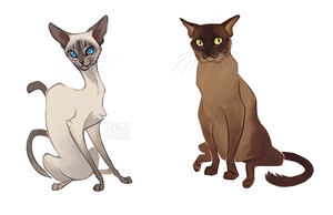 Cats01 by norapotwora