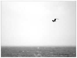 Free Bird by st3to