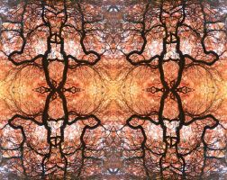 Autumnal Acer Fire Spider Stereo by aegiandyad
