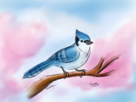 Bluejay by mytigertail