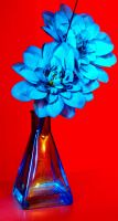 Bright blue flower. by chivt800
