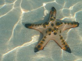 starfish by karenrosemtubay
