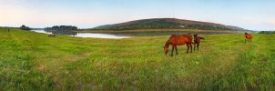 Horses at the river by Viand