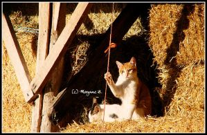 in the hay by moem-photography