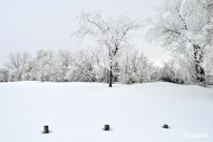 Three Frosty Posts by CrystalAnnPhotos
