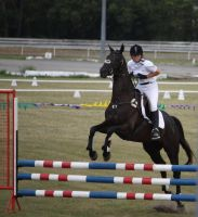 STOCK Showjumping 442 by aussiegal7