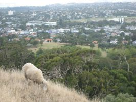 One Tree Hill Sheep by Relphien