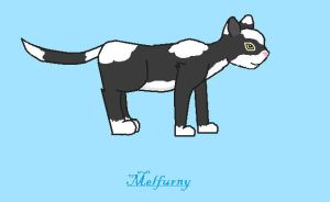 RQ - AsukiWolf's Cat for The Eight Kingdoms by melfurny