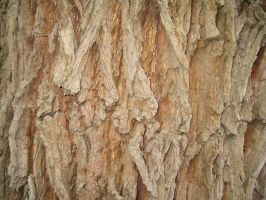 TreeBark by lured2stock