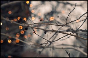 Bokeh by sol0dolo