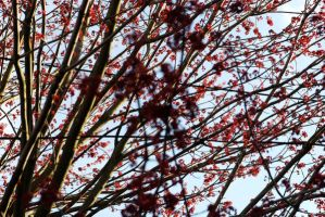 Red branches by Lisa-Marie-Eva