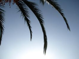 Palm by axelka2