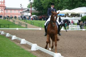 Dressage Travers Stock 01 by LuDa-Stock