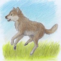 Wolf cub playing in the meadow by koru1243