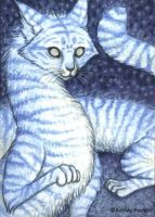 ACEO Snow Cat by vashley