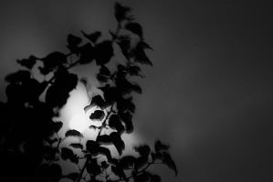Diffused Moon by PhillyPuddy