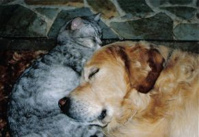 cat and dog sleeping by RachelsPetPortraits