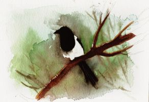 Magpie on a branch by Duffzilla