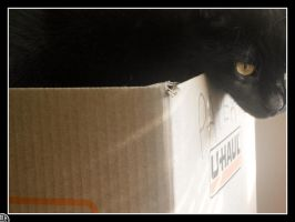 Cat In A Box by kuroineko