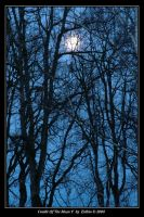 Cradle Of The Moon V 894 by Eolhin