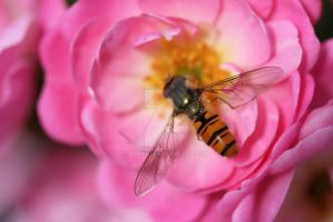 Insect on a flower by kubeki