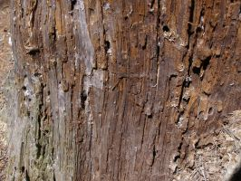 Termite wood texture... by chop-stock