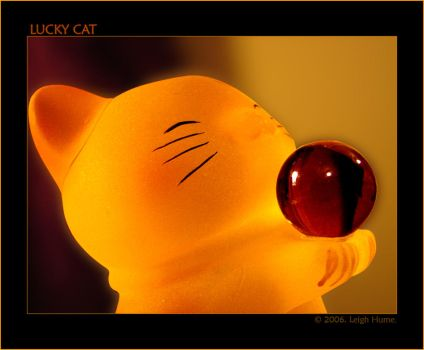 Lucky Cat :: Yellow :: by Juless