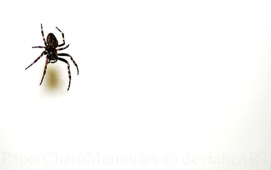 Spider by PaperChainMemories