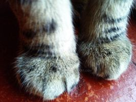 Paws. by charrlahh