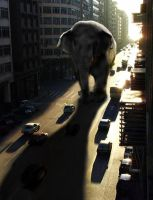 Elephant in the city by Undercovergraphics