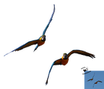 Cut-out stock PNG 120 - macaw parrots in flight by Momotte2stocks