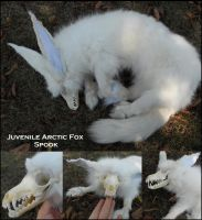 Juvi arctic fox spook by Sharpe19