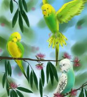 Budgies by HettyBobcat